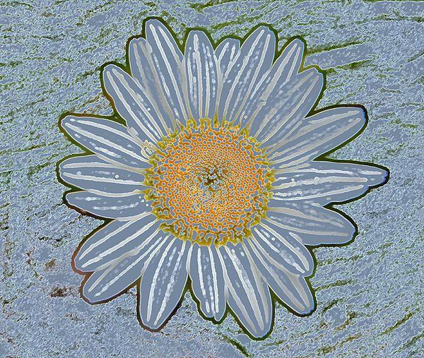 Dusty Blue Striped Daisy Fine Art Print - Mary Sedivy