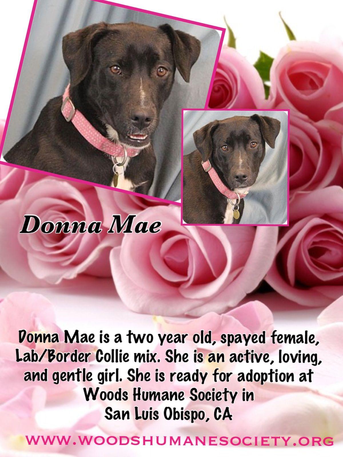 Donna Mae