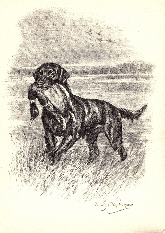 Antique labrador retriever print duck hunting decor dog