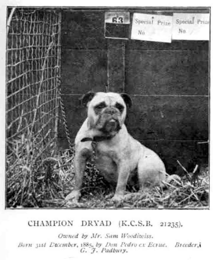 Pin By Chezpia On Vintage Photographs Of English Bulldog Old