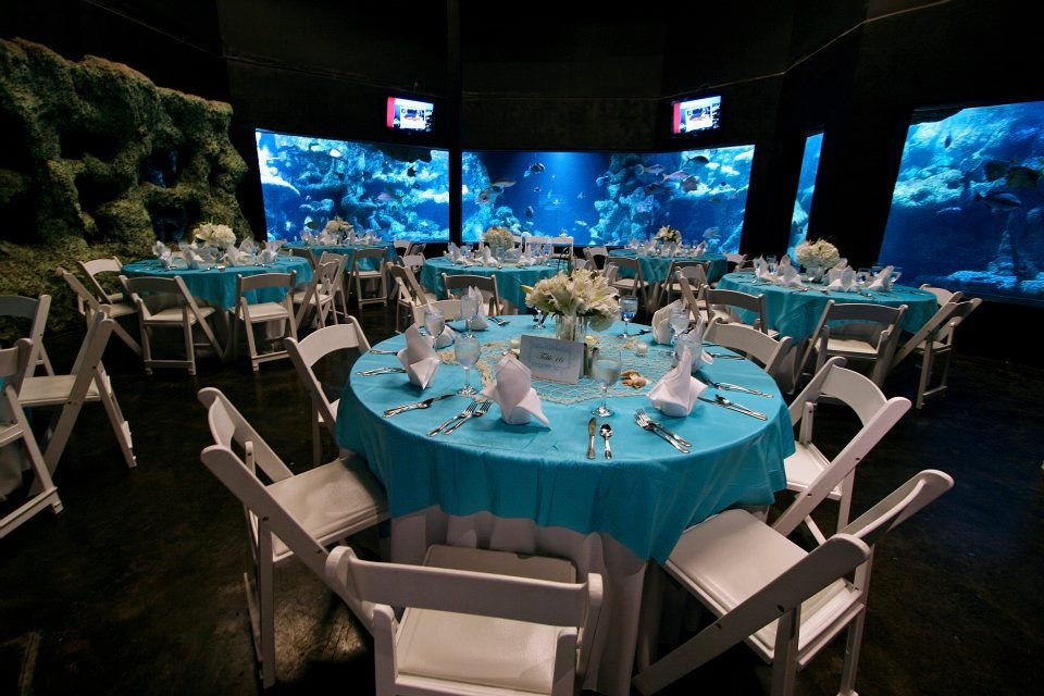 the oklahoma aquarium tulsa ok djconnection tulsa venues