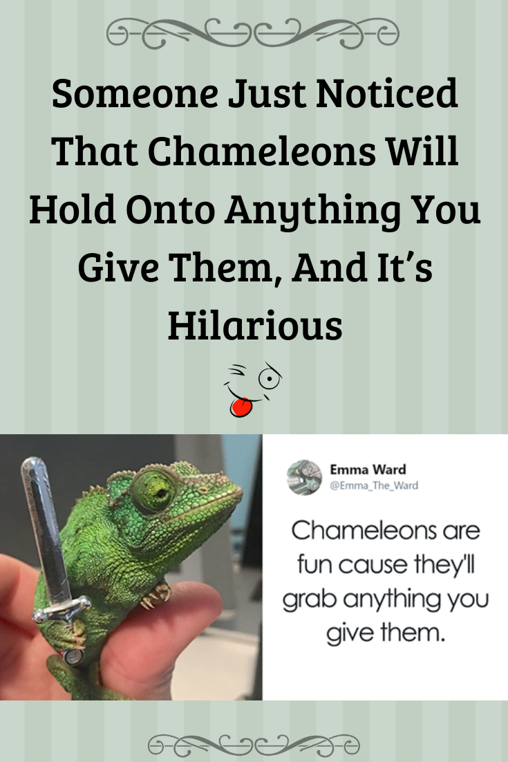Someone Just Noticed That Chameleons Will Hold Onto Anything You Give Them And It S Hilarious In 2020 Jokes And Riddles Hilarious Chameleon