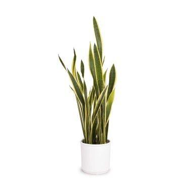 Pin Em Plantes