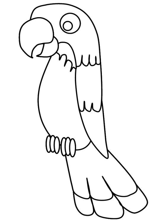 parrot coloring page print out on red construction paper and glue colored feathers on for pirates parrot