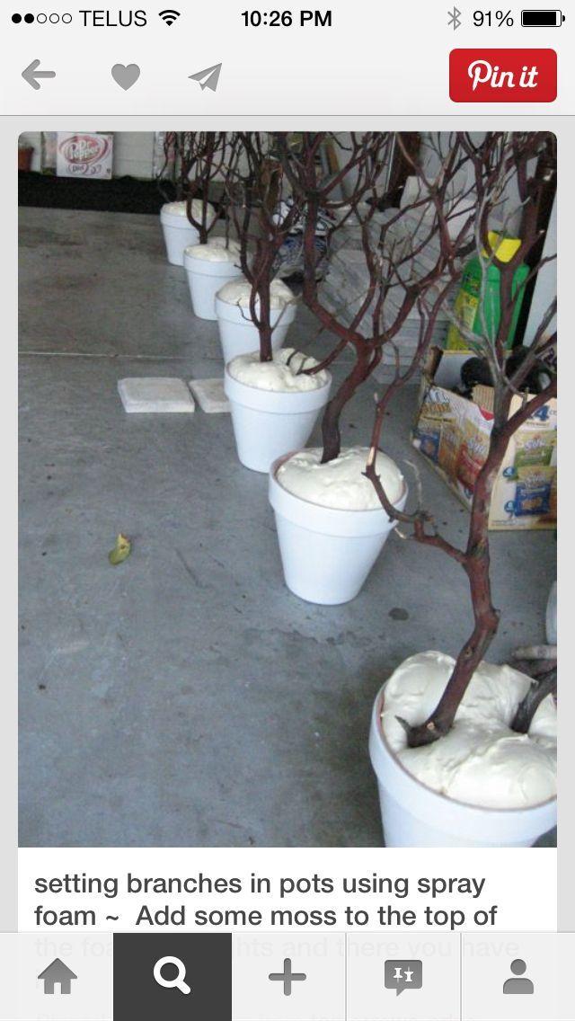 Manzanita Madness!   - Decorating Projects -