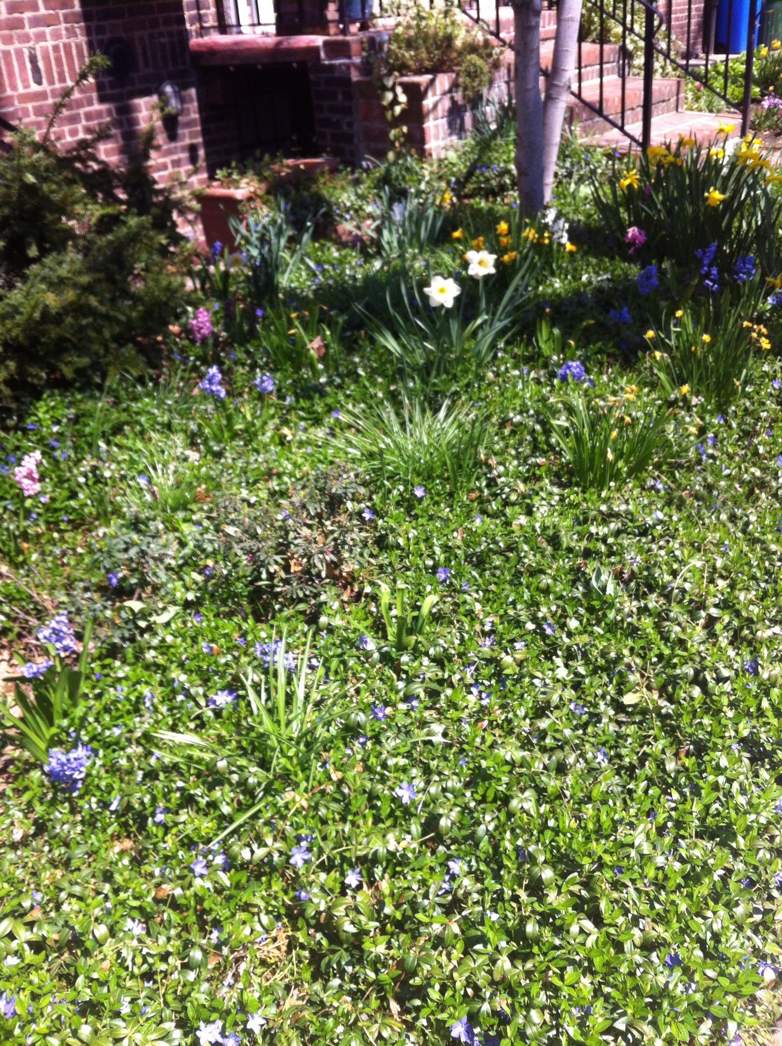 Ground Cover With Spring Flowers Gardens Pinterest Spring