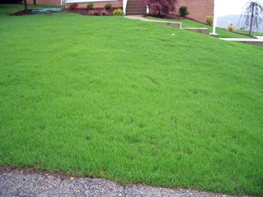 Planting New Lawns With Grass Seed Or Sod Backyard Lawn Care Tips Lawn
