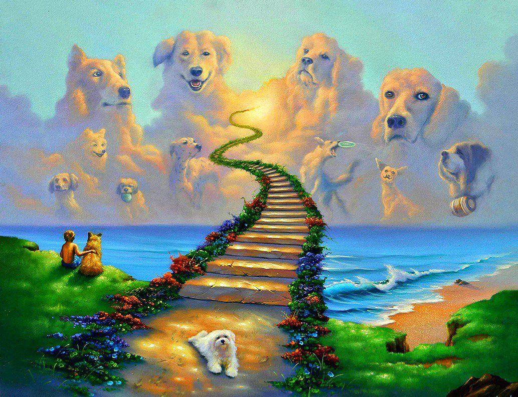 Картинки светлой радуги животным планировкой