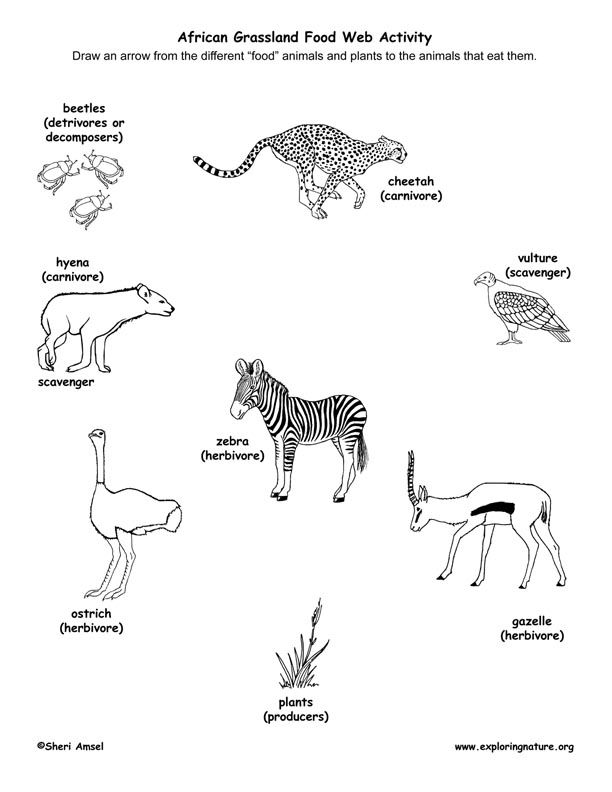 Savanna Animal Food Chain Diagram Wiring For Jvc Car Audio Prairie Web Geek Stanito Com Learn About Webs And African Grasslands From Exploringnature Rh Pinterest Grassland Animals Simple