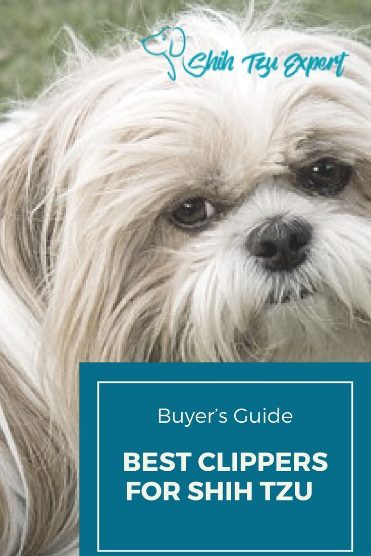 Dog clipper basics and safety tips dog clippers best