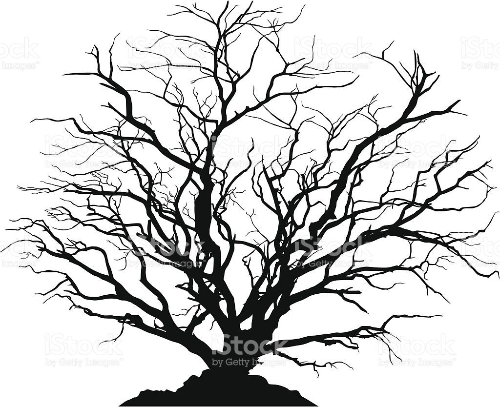 silhouette of a round shaped deciduous tree with no leaves