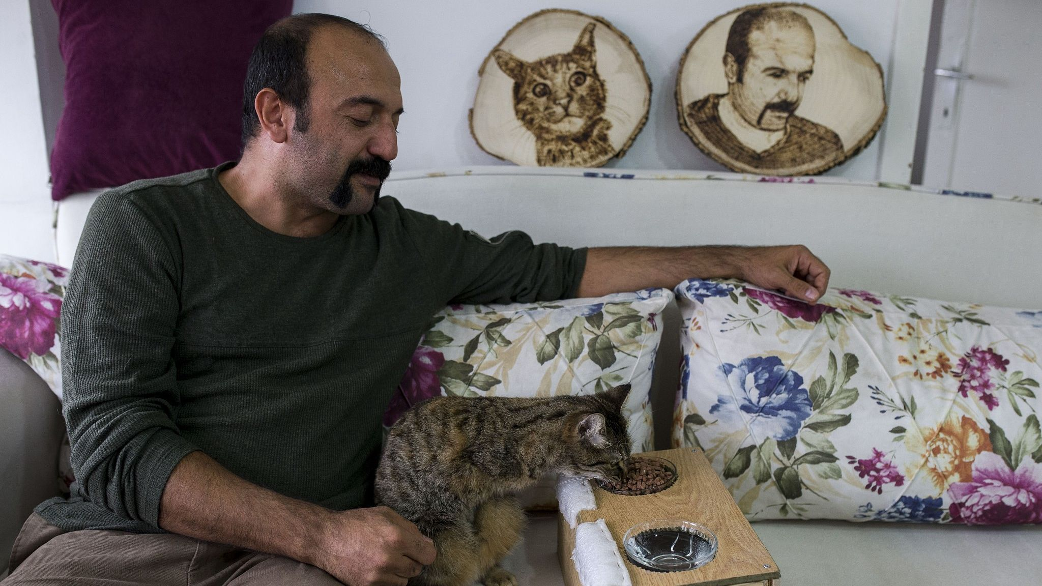 Disabled Cat Rescued By Turkish Carpenter Finds Love At New Home Dog Attack Animal Stories Cat Rescue