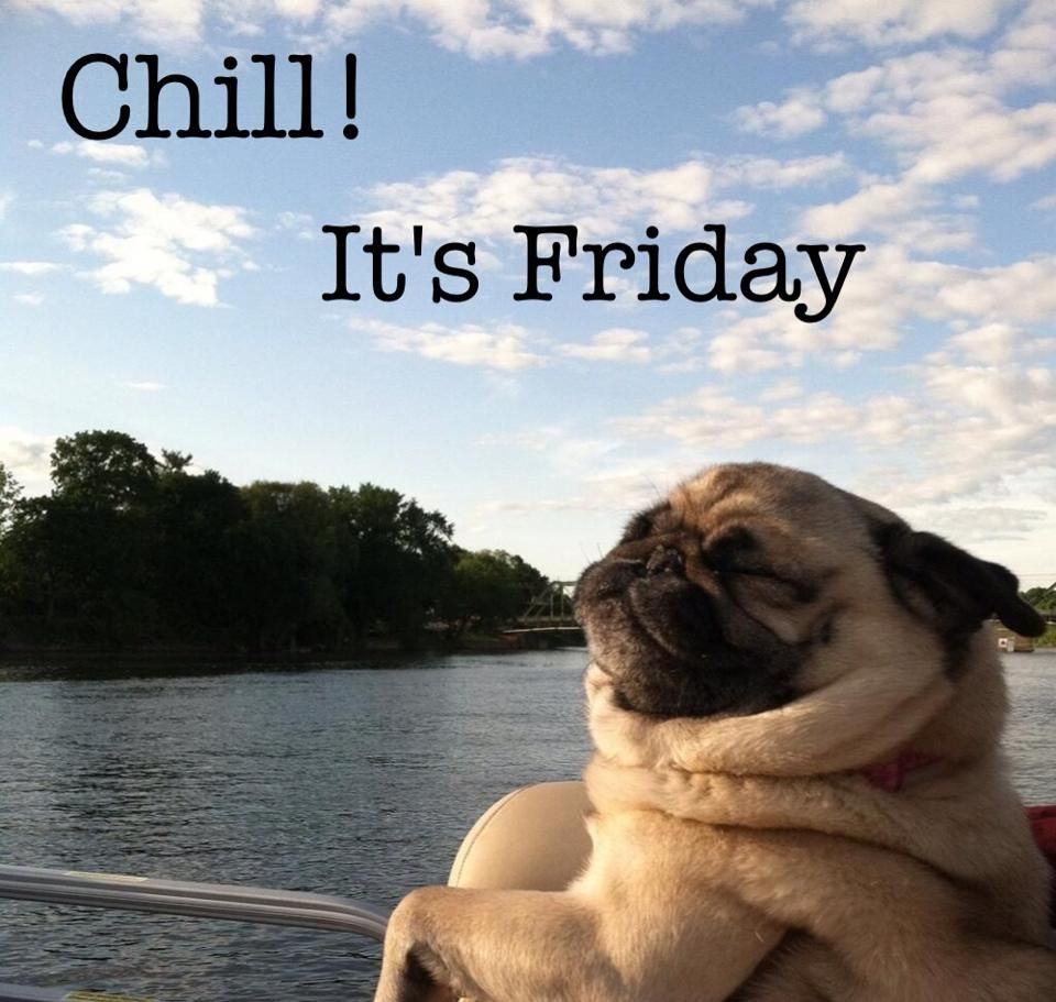 Happy Friday To You Funny Animals Pugs