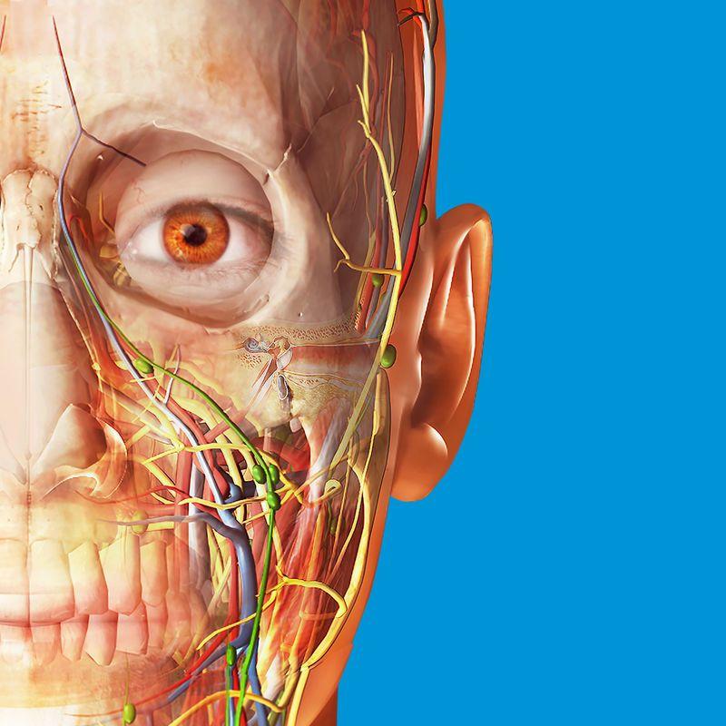 Human Anatomy Atlas 2018 app, Human Anatomy Atlas 2018 Edition is ...