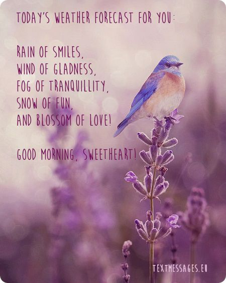 Beautiful Image With Bird And Good Morning Message Various Wishes