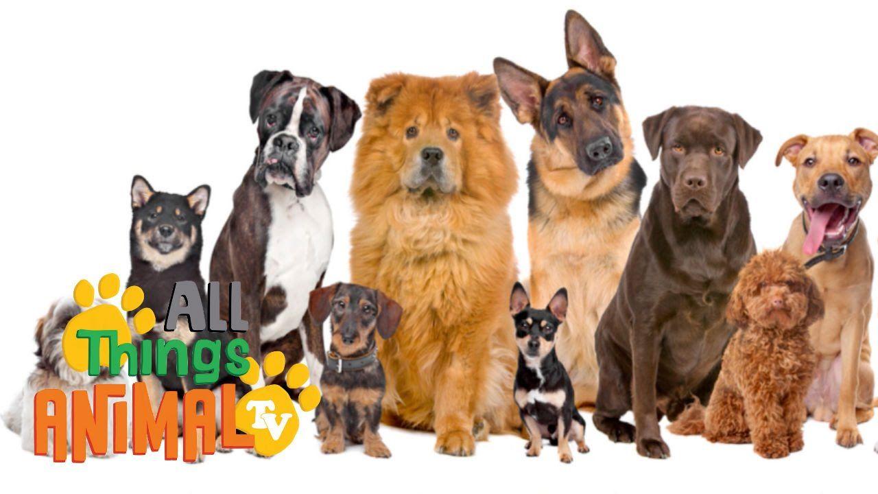 Dogs Animals For Children Kids Videos Kindergarten Preschool