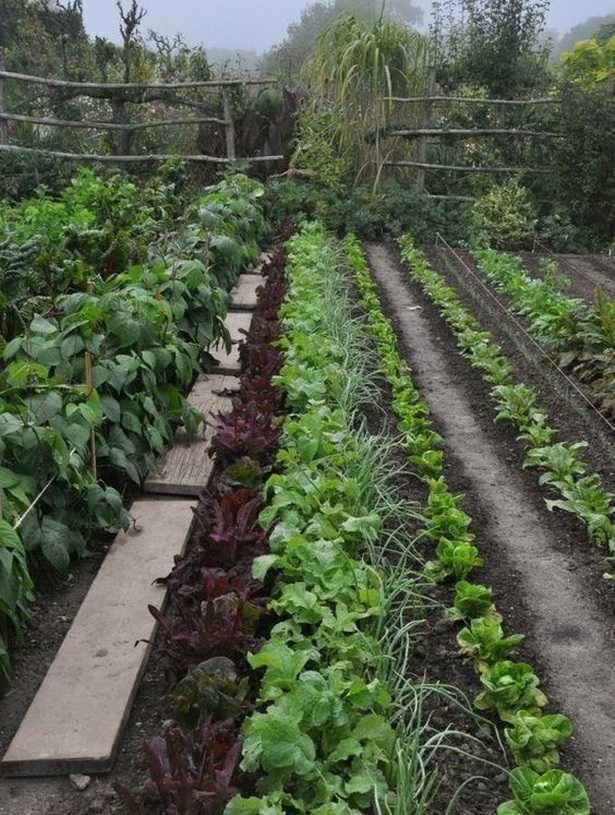Edible Garden Ideas on Backyards_2 #ediblegarden