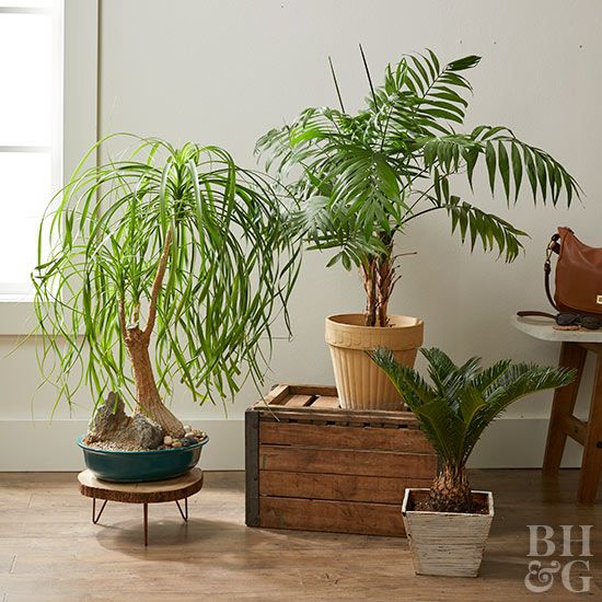106ffb7983e 23 of Our Favorite Low-Light Houseplants