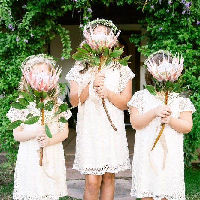 King Protea The Size Of Your Flower Girl S Head That S What S Up By Jemerling Flower Girl Flowers Flower Girl Dresses