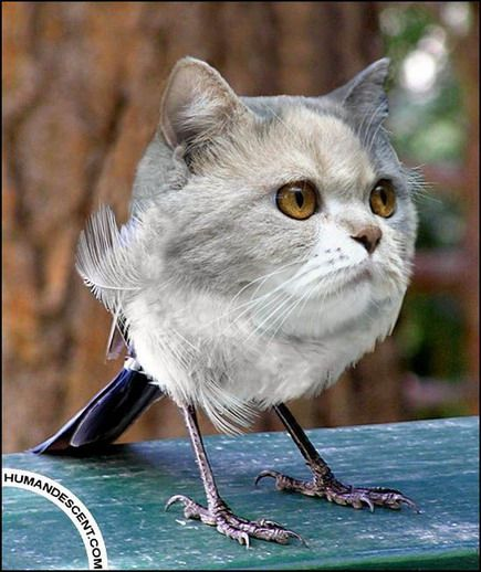 Nice Pets Blog Blog Archive Unusual Animals Photoshop Photoshopped Animals Weird Animals Bizarre Animals