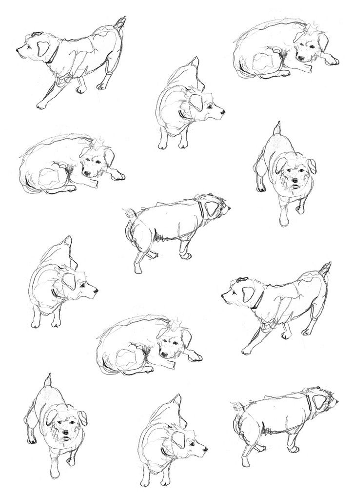 Dog sketch via Kid\'s Book Design - Tap the pin for the most adorable ...