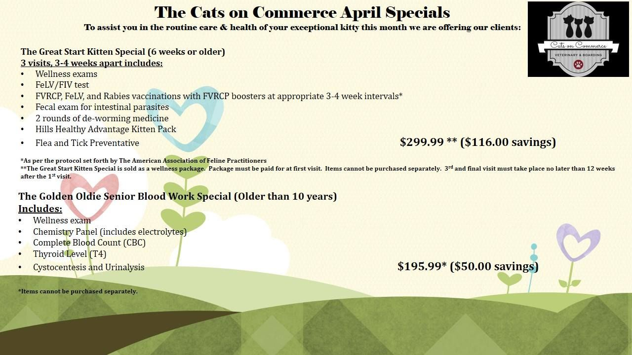 It S Kitten Time Check Out The Wellness Package For Your Mew Little Additions Or The Golden Oldie Special For Our Older Feline Famil Kitten Wellness Greatful