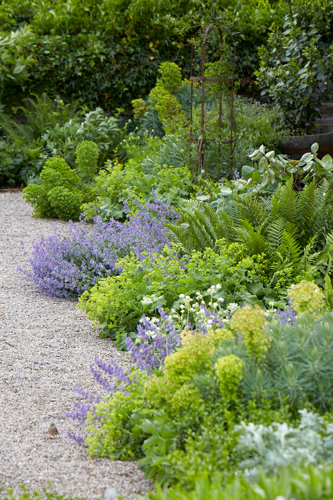 Gardening 101 Lady's Mantle is part of Gravel garden, Ferns garden, Dream garden, Cottage garden design, Urban garden, Mediterranean garden - Lady's Mantle, Alchemilla mollis  Gentle Alchemy  Alchemilla mollis is ubiquitous in English cottage gardens for good reason  Lady's mantle is an unfussy,