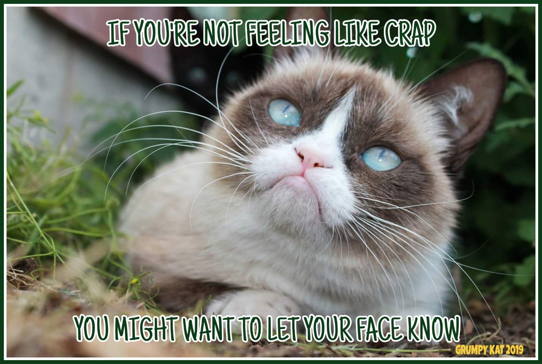 Another Grumpy Cat Meme By The Other Grumpy Kat 2019 Did