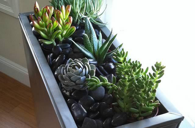 Conseils pratiques pour créer ton propre jardin d\'intérieur ...