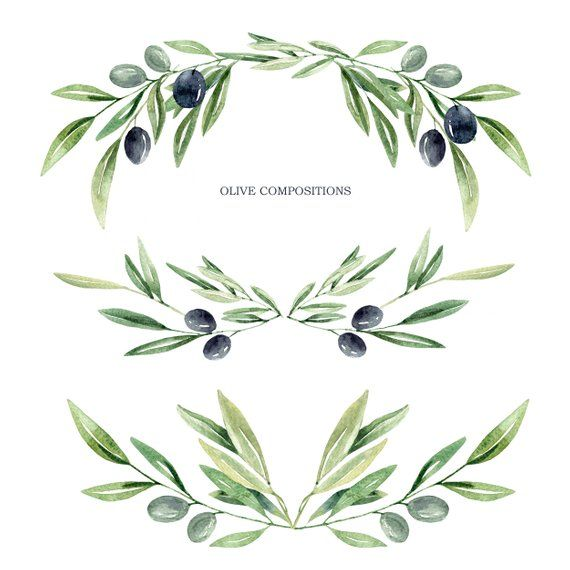 Watercolor Olive Branch Leaves Clipart Watercolor Leaves Olive