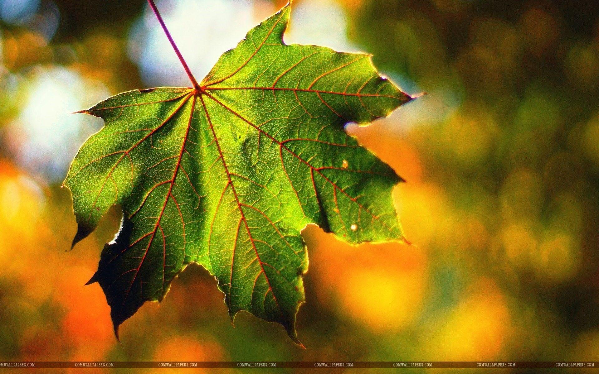 Macro Leaf Fall September Wallpaper