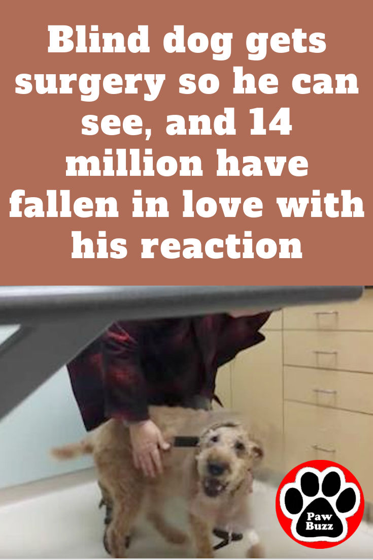 Blind Dog Gets Surgery So He Can See And 14 Million Have