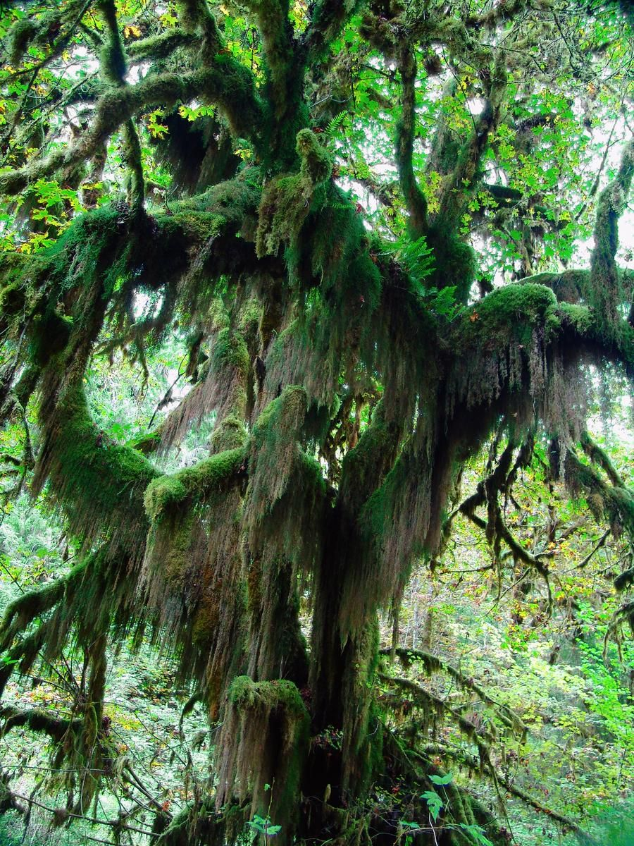 Names of Rainforest Trees Forest Trees (2014, pointand