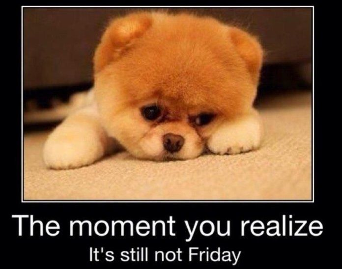 Still Not Friday Quotes Cute Quote Puppy Friday Lol Funny Quote
