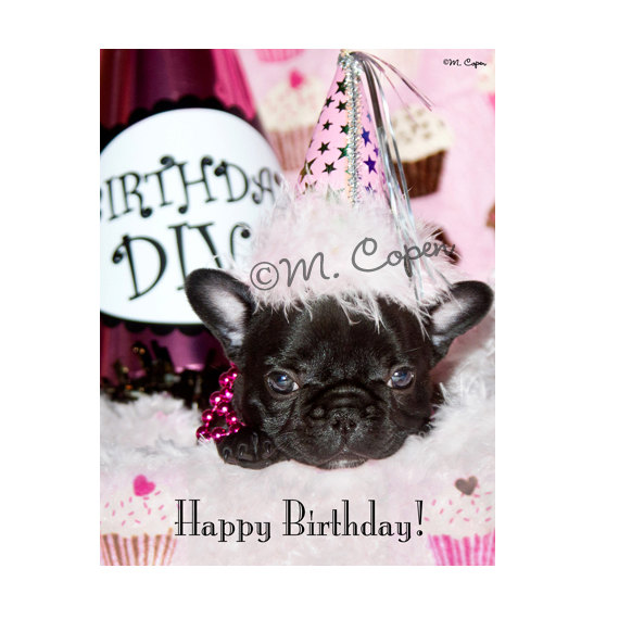 Happy Birthday French Bulldog Cards Set Of 2 By MCopen