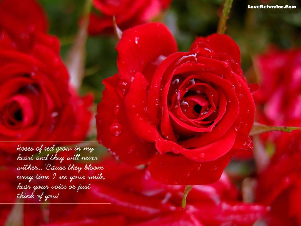 Wallpapers tagged with roses roses hd wallpapers page 19201080 love quotes for her roses latest wallpapers of roses with quotes quoteeveryday izmirmasajfo Gallery