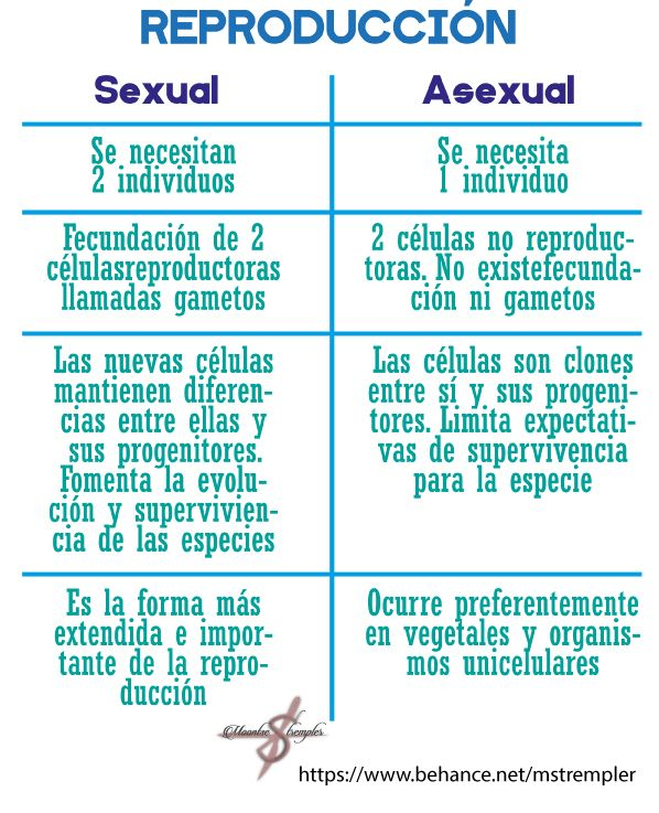 Soy una persona asexual and sexual reproduction
