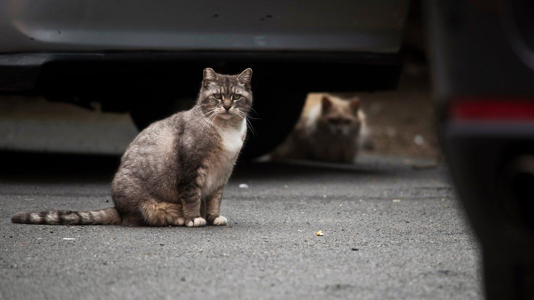 Now Displaced By New York S Gentrification Feral Cats Feral