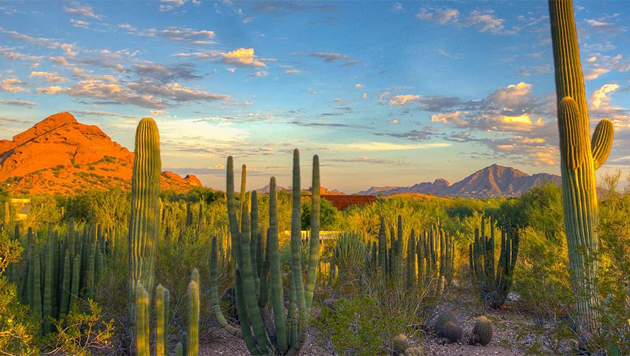 Superieur Desert Botanical Garden, Phoenix, Arizona, Is A Botanical Garden Which Is  Devoted To Planting Cactus And Desert Plants.