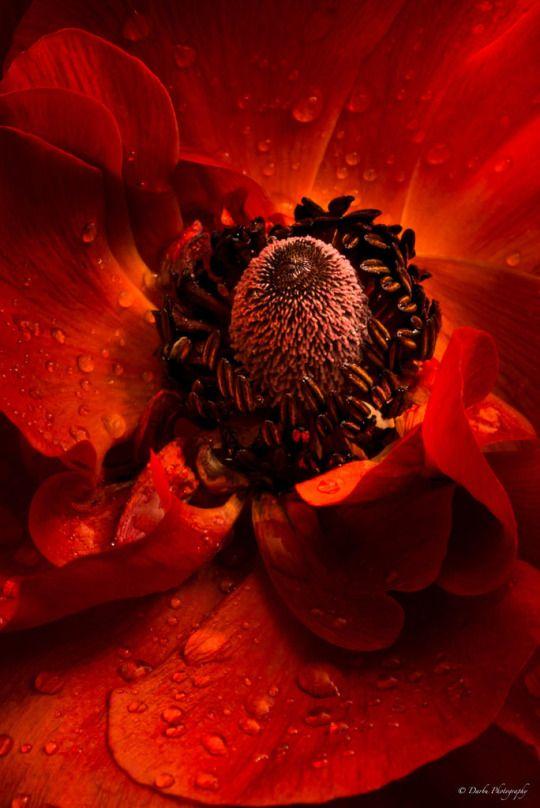 Coffeenuts Mit Bildern Schone Blumen Mohn Blumen