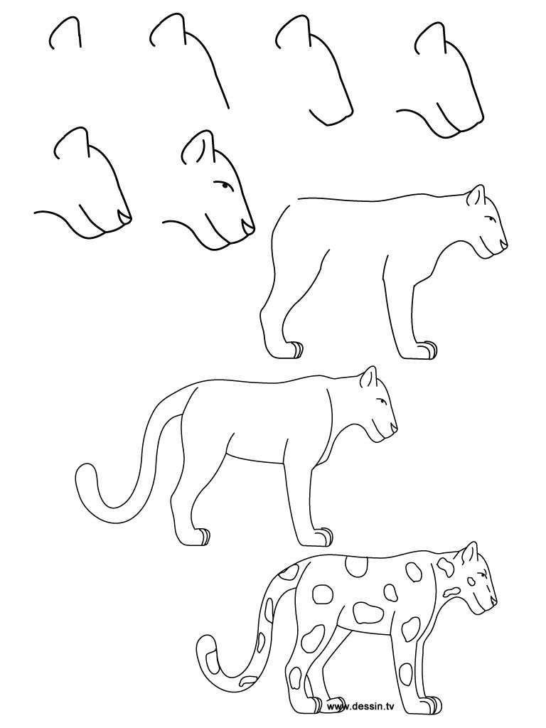 How to draw simple learn how to draw a jaguar with simple step by step instructions
