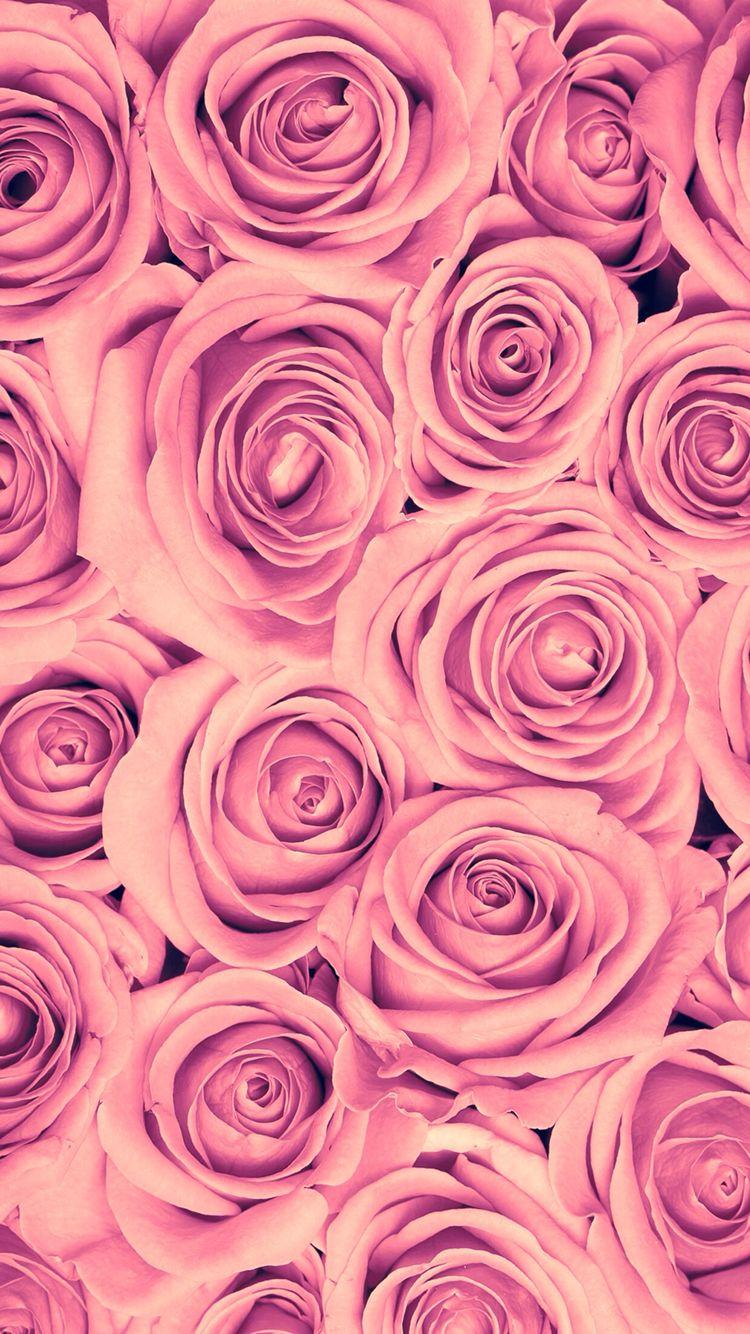 wallpaper flowers rose iphone fashion love amazingwallpaper pinterest blumen. Black Bedroom Furniture Sets. Home Design Ideas