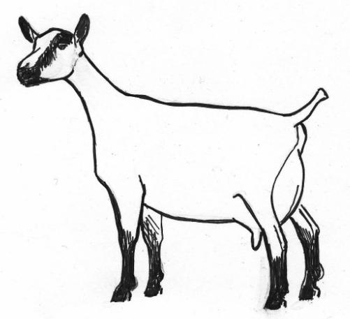 drawings of milk | ... and a Goat! FREE– Real Raw Goat ...