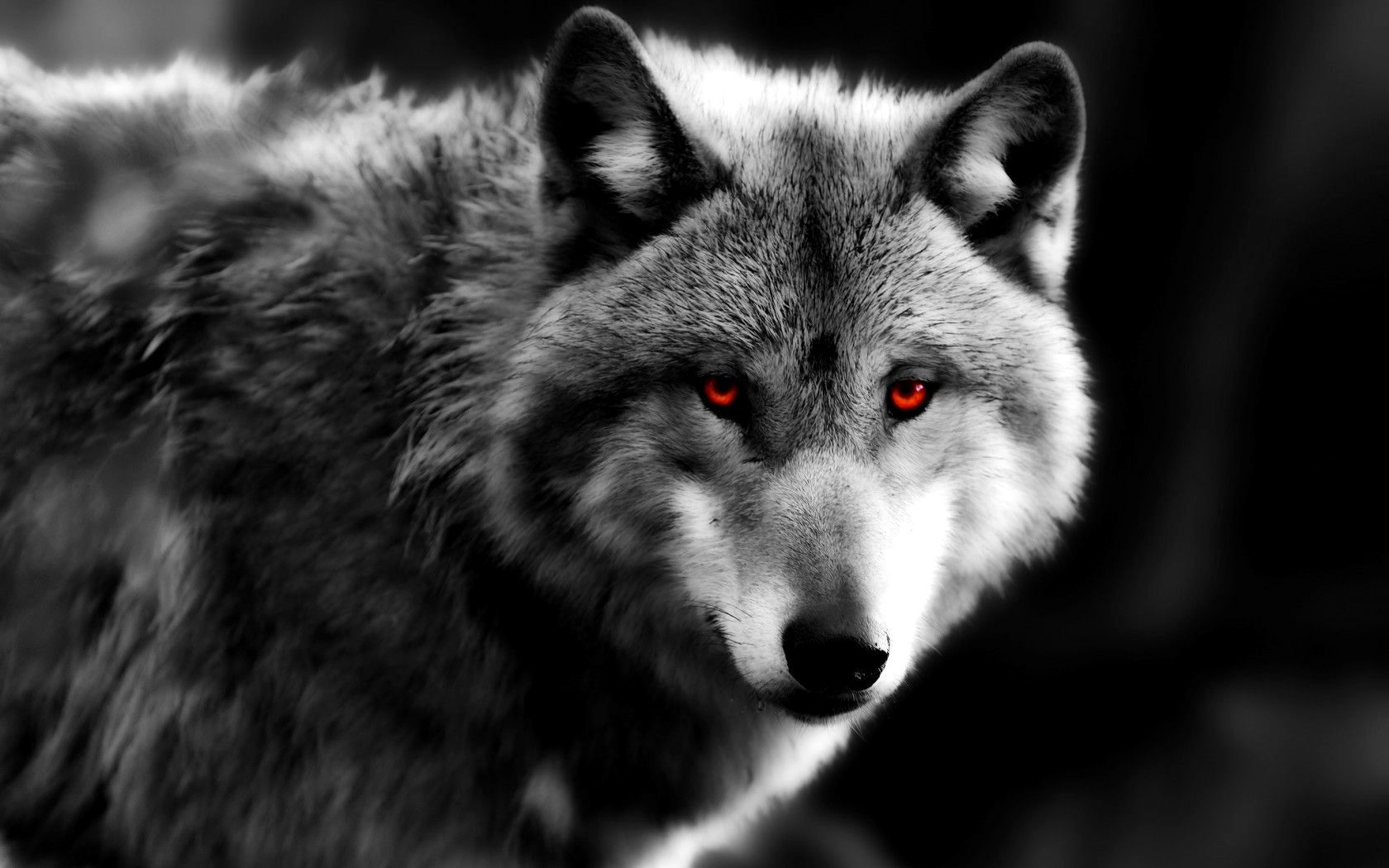 Wallpaper 4k Pc Wolf Trick 4k Wolf With Red Eyes Wolf Eyes Red Eyes