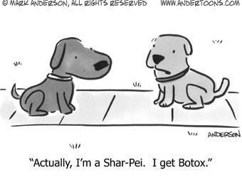 Shar Pei With Botox Cartoon Dog Surgery Humor