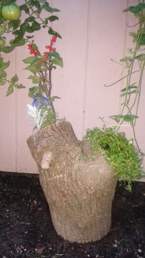 Log Garden. Chiseled the ends to make natural planters