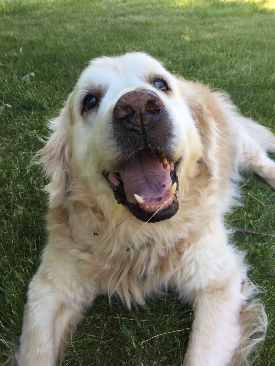 Handsomedogs This Is Aidan He S A 10 Year Old Golden Retriever
