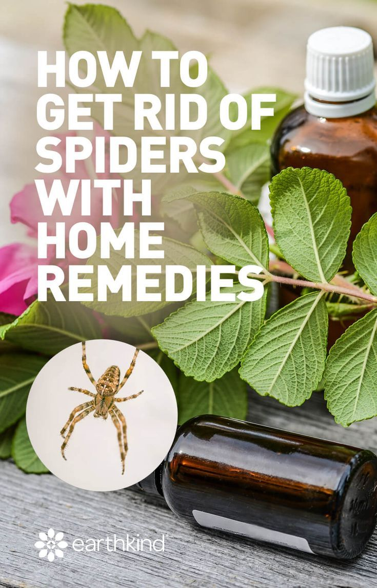 How to get rid of spiders with home remedies get rid of
