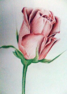 Rose Shading With Color Pencils Flower Drawing Pencil Drawings Of Flowers Color Pencil Art