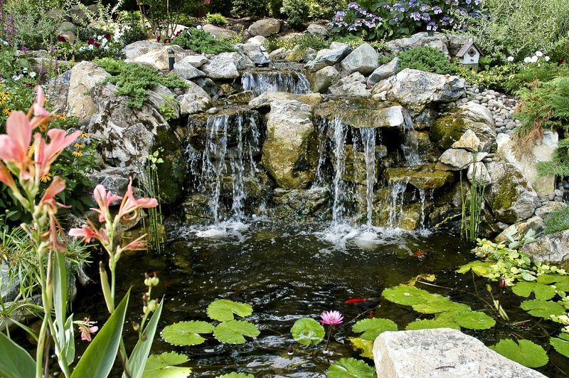 Putting the eco in pond ecosystems pond maintenance for Koi pond upkeep